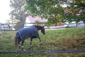 Chester Springs PA horses